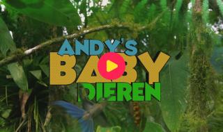 Andy's baby dieren