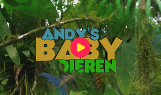 Andy's baby dieren