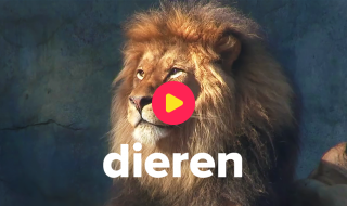 Dieren