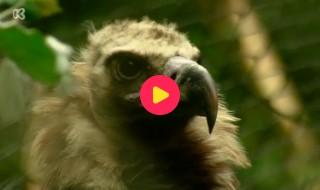 De Zoo-Reporters: Monniksgier compilatie