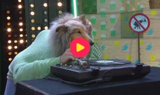 Coole hondenparty in de studio!