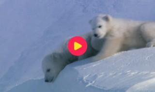 Andy's baby dieren: Eerste stapjes