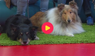 Honden met een hobby