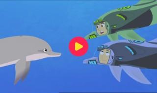 Kratts in het wild: We spreken dolfijns