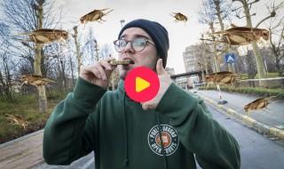Thomas eet krekelkoekjes