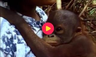 De wereld rond met Kaatje: Borneo