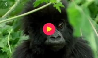 De wereld rond met Kaatje: Congo