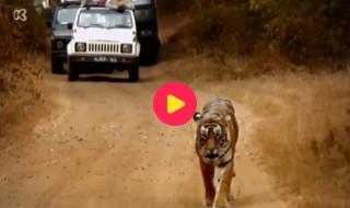 De wereld rond met Kaatje: India
