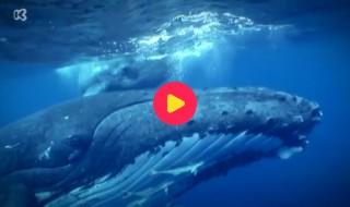 Piet Piraat wonderwaterwereld: Aflevering 1