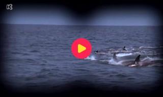 Piet Piraat wonderwaterwereld: Aflevering 5
