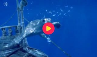 Piet Piraat wonderwaterwereld: De potvis/Walvishaai