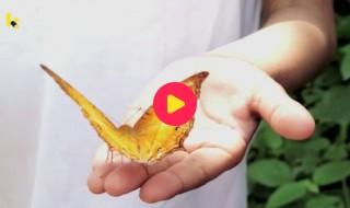 natuur: vlinder op hand