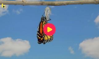 natuur: vlinder
