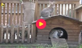dieren: konijnenhuisje