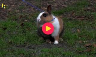 kids: wandelen met konijn