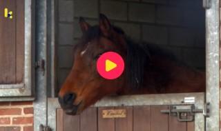 Dieren: pony