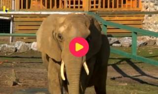 Dieren: olifant