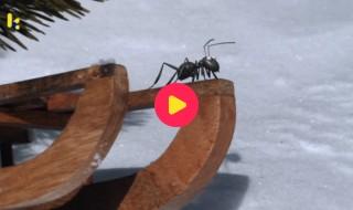 Minuscule: Slee en de mier