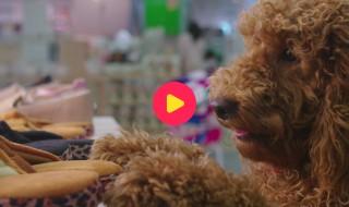 Waffie, de wonderhond: Aflevering 12 - Waffies dagje uit