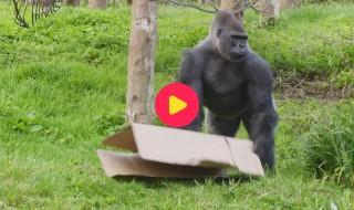 De Zoo: Reeks 1 - Aflevering 17