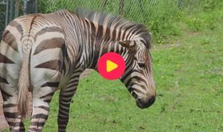 De Zoo: Reeks 1 - Aflevering 19