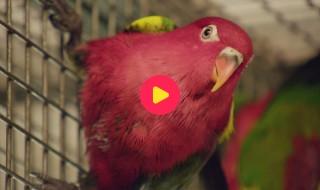 De Zoo: Reeks 1 - Aflevering 16