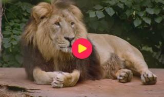 De Zoo: Reeks 1 - Aflevering 4