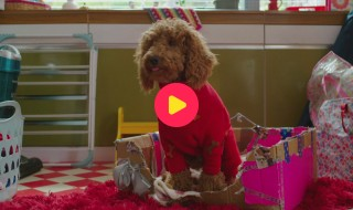 Waffie, de wonderhond: Aflevering 17