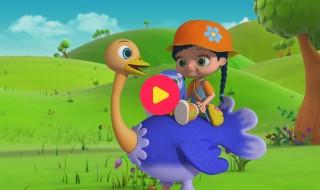 Wissper: Struisvogel op snelheid