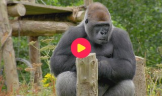 De Zoo: Reeks 1 - Aflevering 3