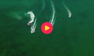 video florida walvissen