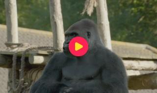 De Zoo: Reeks 1 - Aflevering 5