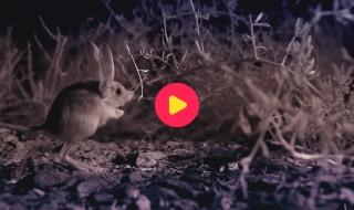 Andy's baby dieren: Springen