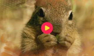 Andy's baby dieren: Praten