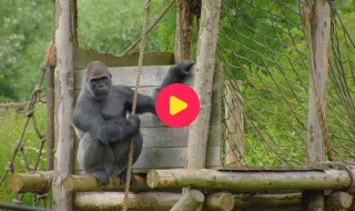De Zoo: Reeks 1 - Aflevering 12
