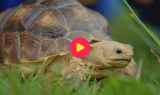 Andy's baby dieren: Verstoppen