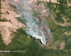 Karrewiet: Wereldwijd protest tegen de branden in het Amazonewoud