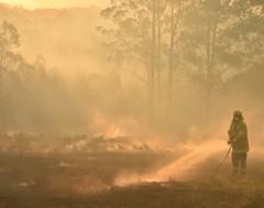 Karrewiet: Syndey kleurt oranje door bosbranden