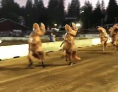 Karrewiet: Gekke T-rex loopwedstrijd