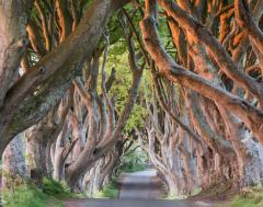 Karrewiet: Fans maken bomen stuk