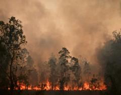 Karrewiet: Bosbranden in Australië