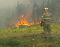 Karrewiet: 1.000 brandweermannen helpen bij bosbranden