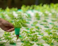 Karrewiet: Hoe je oude matras het milieu kan helpen