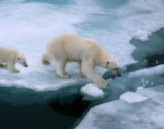 Karrewiet: Dé schuldige voor het warmste jaar