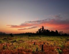 Karrewiet: Indonesië krijgt nieuwe hoofdstad
