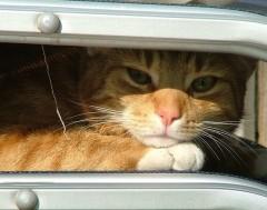 Karrewiet: Ook dieren hebben het warm