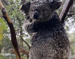 Karrewiet: Na bosbranden nu ook overstromingen in Australië
