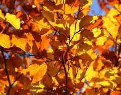 Karrewiet: De (astronomische) herfst is gestart!