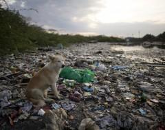 Karrewiet: Tegen 2050 meer plastic dan vissen in de zee?!