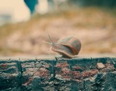 Karrewiet: Geheugen-transplantatie bij slakken
